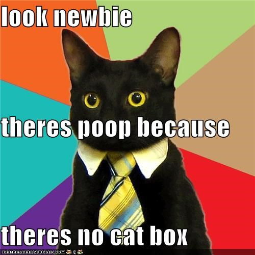 look newbie theres poop because  theres no cat box