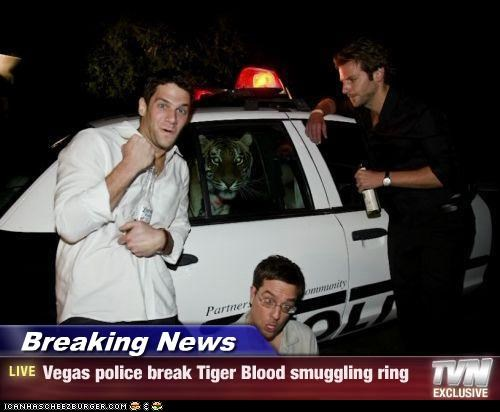 'Tiger Blood' Smugglers Apprehended! More At 11...