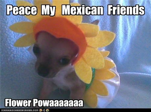 Peace  My   Mexican  Friends