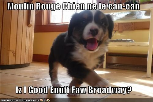 bernese mountain dog,broadway,can can,chien,dancing,french,good,good enough,moulin rouge,puppy,question,translation