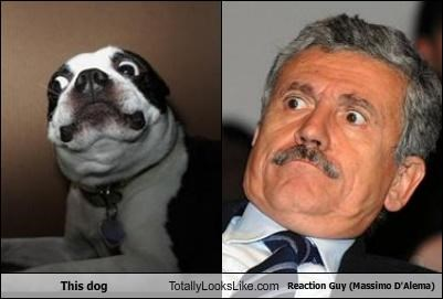 This Dog Totally Looks Like Reaction Guy (Massimo D'Alema)