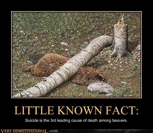 beavers,fact,suicide,they hate life