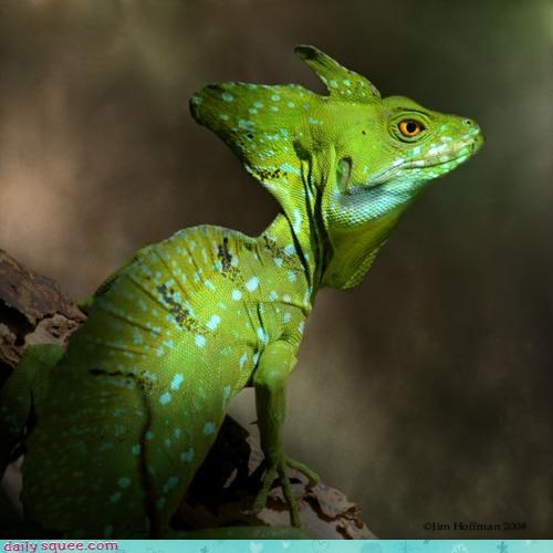 Whatsit Wednesday: Whatsit Lizard is Highly Distinguished