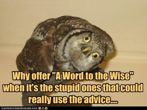 advice,caption,captioned,contrary,derp,derpface,offer,Owl,question,stupid,why,wise,word