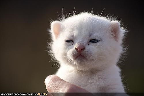 Cyoot Kitteh of teh Day: Son, Ai Am Dissapoint