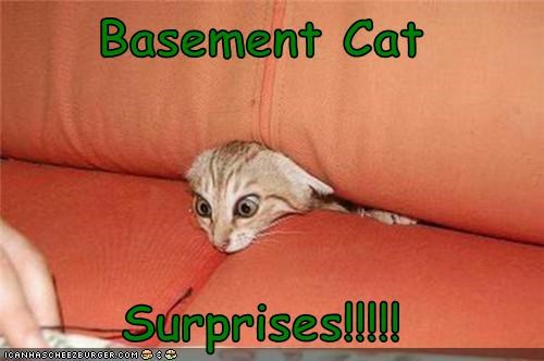 Basement Cat  Surprises!!!!!