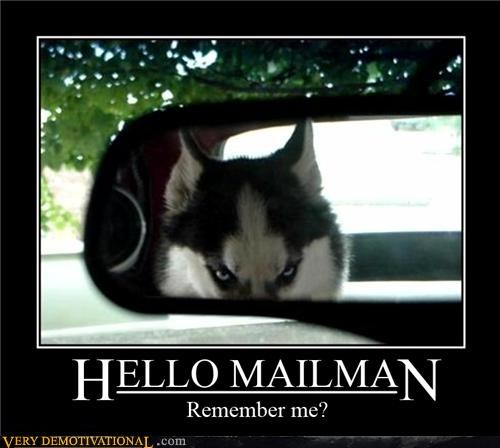 dogs,evil,Hall of Fame,mailman,rear view