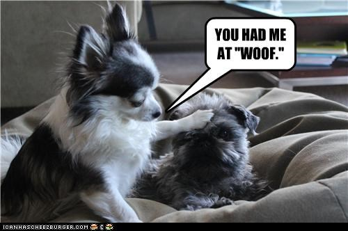 "YOU HAD ME  AT ""WOOF."""