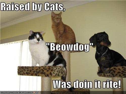 beowulf,cat,Cats,dachshund,doing it rite,perching,prefix,pun,raised,stand