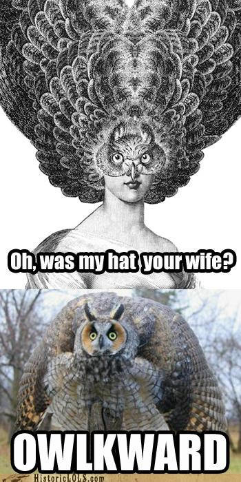 My Bad, Mr. Owl! Fashion First, As They Say...
