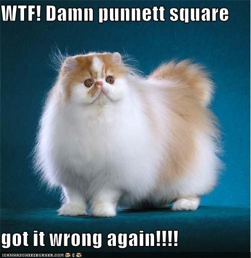 WTF! Damn punnett square  got it wrong again!!!!