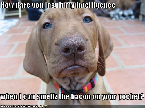 How dare you insult my intelligence  when I can smellz the bacon on your pocket?