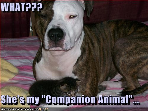 "WHAT???  She's my ""Companion Animal""..."