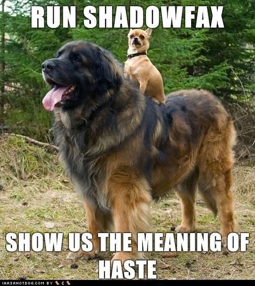 chihuahua,gandalf,haste,horse,Lord of the Rings,quote,run,shadowfax,tibetan mastiff,wizard