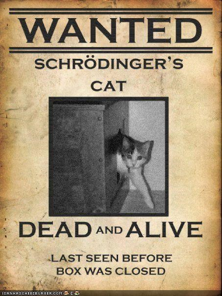 alive,best of the week,box,boxes,dead,experiment,puns,schrodinger,wanted
