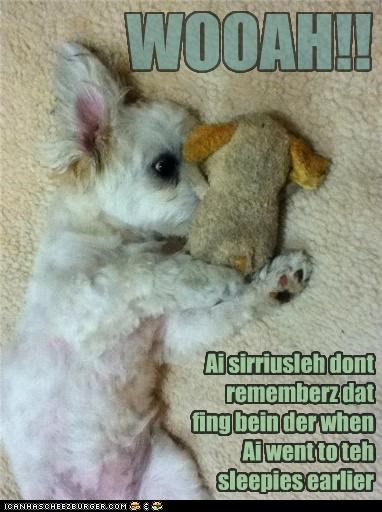 confused,dont,puppy,remember,sleep,surprised,toy,waking up,whatbreed,woah
