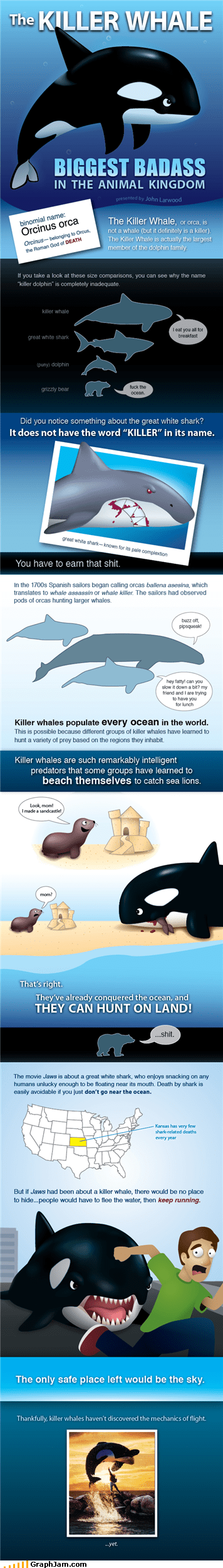 cracked,evil,infographic,killer whales,orcas