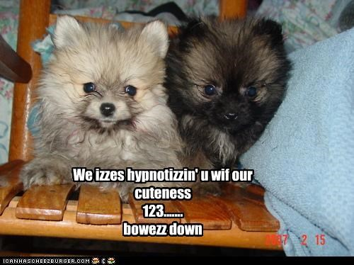 We izzes hypnotizzin' u wif our cuteness 123....... bowezz down