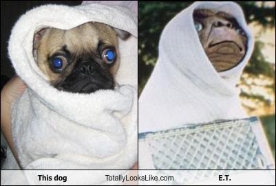 alien,animals,dogs,ET,pug