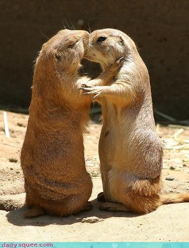 happy ending,love,love story,number,prairie dog,Prairie Dogs,sequel,shakespearean,story,two