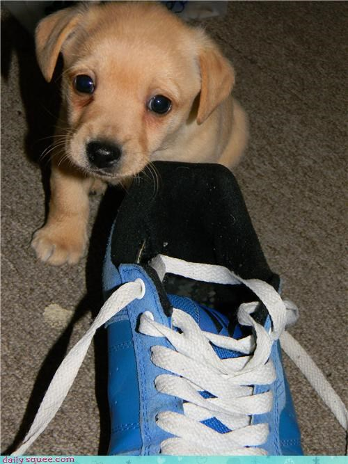 Oscar and His Shoe