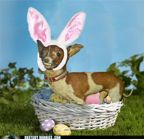 Rizzydog is the Easter Doggy