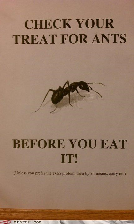 ants,food,infestation,sign,snack,treat,weird,wtf