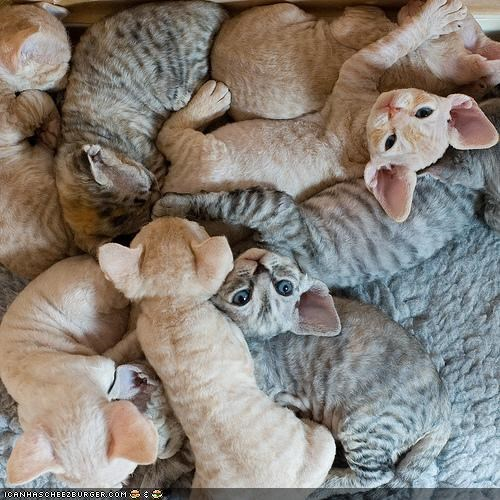 Cyoot Kittehs of teh Day: FLUFF PILE!!!