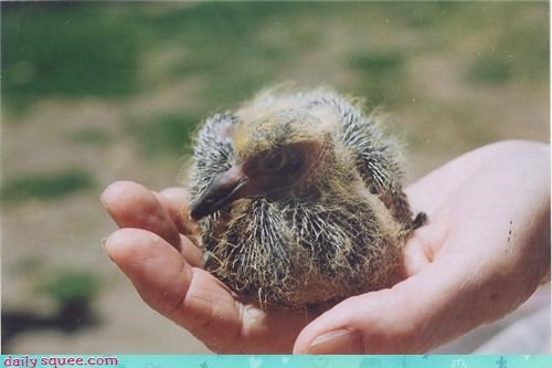 Whatsit Wednesday: Fuzzy Little Birdie Baby