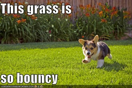 This grass is   so bouncy
