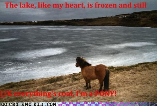 You Silly Pony!