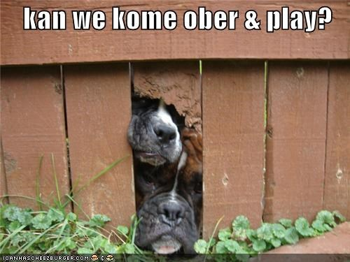 asking,boxer,boxers,come over,do want,fence,gap,peeking,play,question