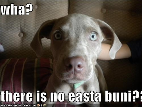 wha?  there is no easta buni??