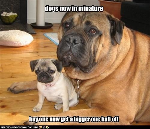 dogs now in minature