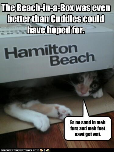 beach,better,box,caption,captioned,cat,do want,exceeding,expectations,feet,fur,happy,no,positives,pros,sand,wet