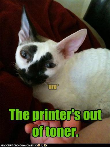 accident,black,caption,captioned,cat,fyi,guilty,ink,out,printer,spot,toner