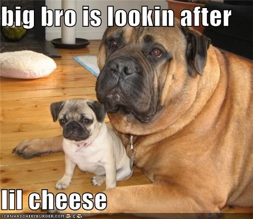 big bro is lookin after  lil cheese