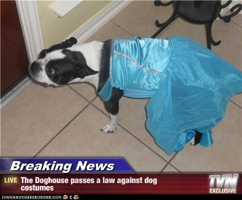 Breaking News - The Doghouse passes a law against dog  costumes