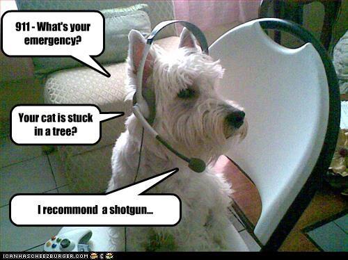 911,cat,emergency,question,recommendation,scottish terrier,shotgun,stuck,tree
