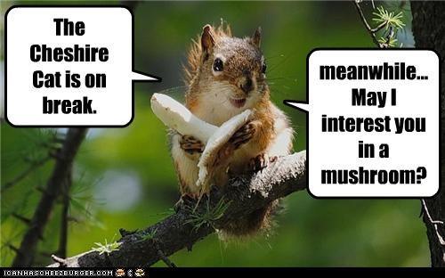 alice in wonderland,book,break,caption,captioned,cat,cheshire cat,lewis caroll,mushroom,offer,squirrel
