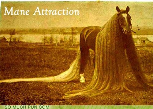 attraction,coarse,course,double meaning,homophone,horse,literalism,main,main attraction,mane