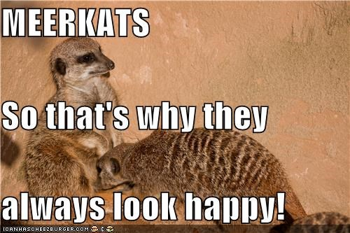 MEERKATS So that's why they  always look happy!