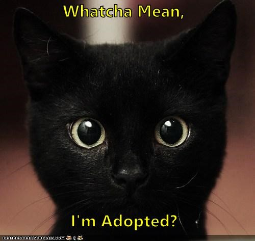 Whatcha Mean,  I'm Adopted?