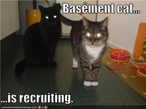 Basement cat...  ...is recruiting.