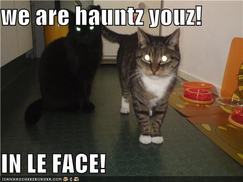 we are hauntz youz!  IN LE FACE!