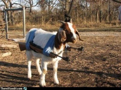animals,goat,guns,poll,war,weapons,wtf