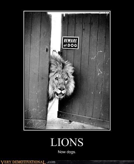 dogs,lions,sign,wrong