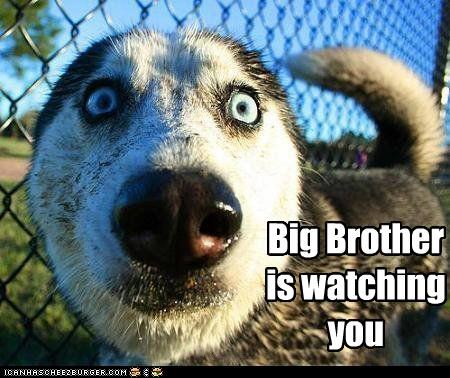 1984,afraid,being watched,big brother,cannot unsee,do not want,fear,george orwell,husky,shocked,slogan,watching