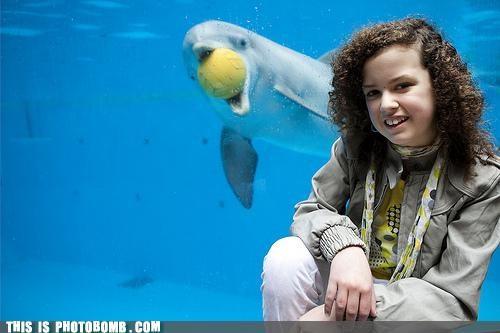 Animal Bomb,aquarium,ball,dolphin,sea world,seal