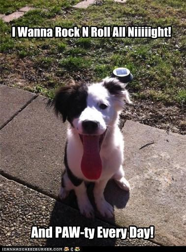 band,border collie,Gene Simmons,i wanna rock and roll all night,KISS,lyric,puppy,song,tongue